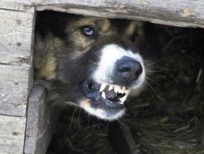 Под Новосибирском обнаружили больную бешенством собаку