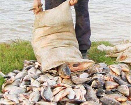где и когда нельзя ловить рыбу в ростовской области