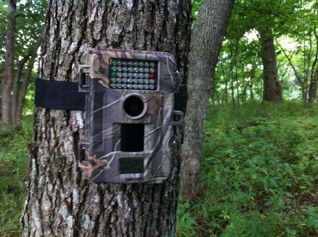Скрытая фото камера в лесу