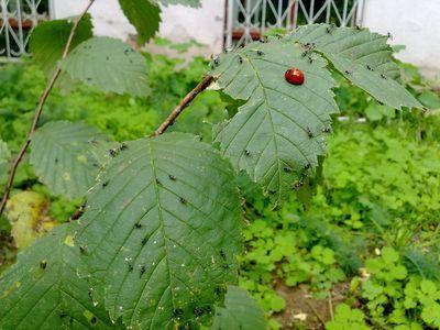 Погода в широком широковский район днепропетровская